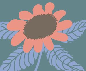 flower (maybe sunflower)