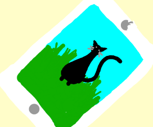 Cat picture in an ipad