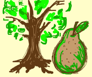 Big pear next to a tree