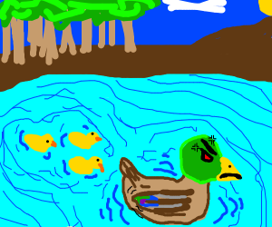 Angry duck swimming with ducklings