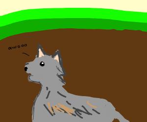 Underground Wolf