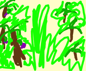 Eggplant in a Forrest