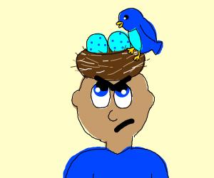 blue bird lays egg on unhappy man's head