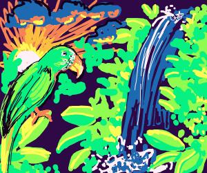pretty waterfall, sunset, and green bird