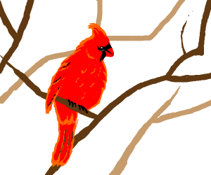 Red bird in a tree