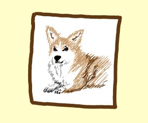 A corgi portrait
