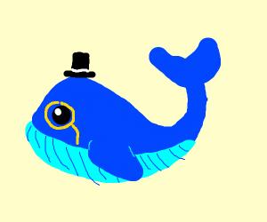 dapper whale