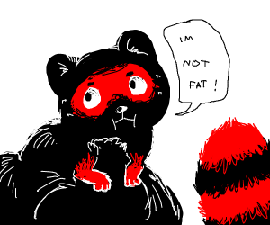 Overweight racoon in denial