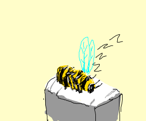 Bee Snoozing
