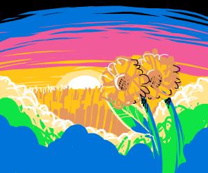 Sunflower and sunset