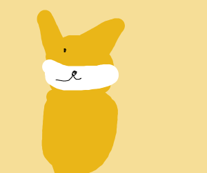 cat with a cat mouth mask