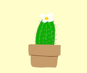 cactus on a flowerpot