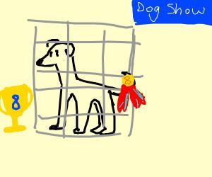 8th best dog gets awards