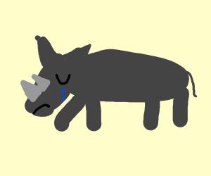 Sad Rhino :(