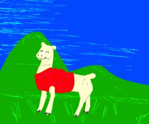 Happy Llama in sweater