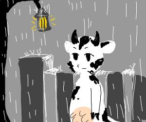 Cow in Rain