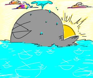 XD whale