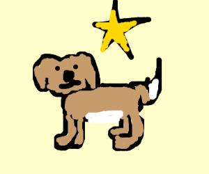 Dog & star