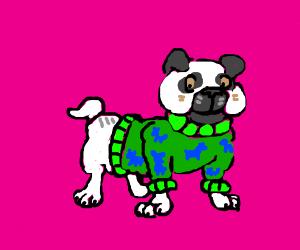 Pug in a green striped dog sweater
