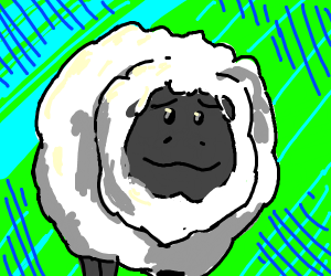 A good sheep boi