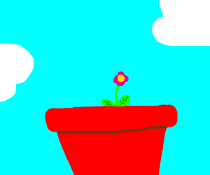 small flower in big pot