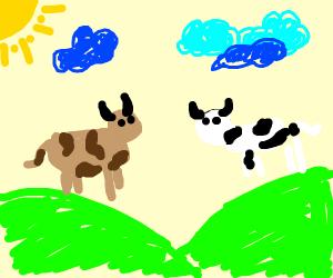 High cow trips in a field