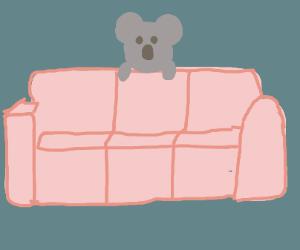 koala showing peace lying on couch