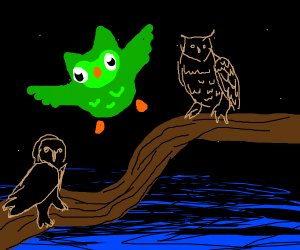 duolingo with other owls