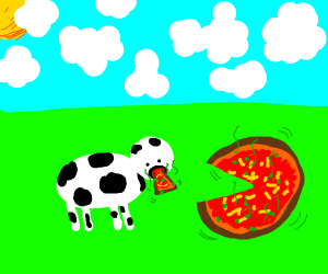 Cow eating pizza. Pizza is poisonous.