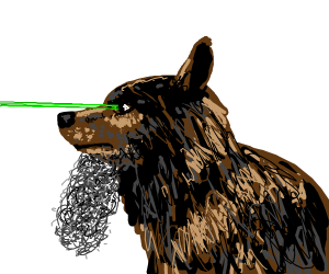 Bearded dog has laser vision