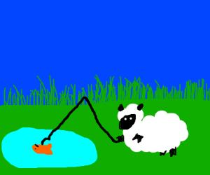 Sheep going fishing