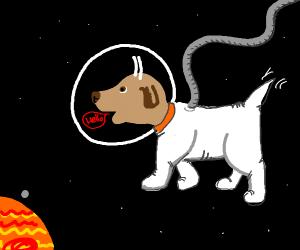 Space doggos say hello