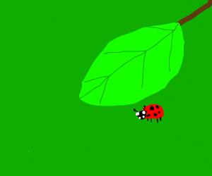 ladybug hiding under a leaf