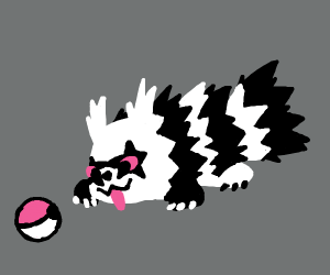 Raccoon finds a Pokeball