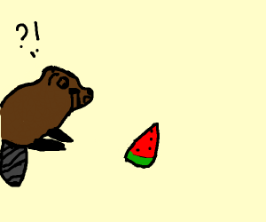 beaver shocked  by watermelon