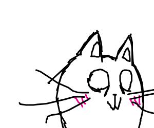 0w0 kitty