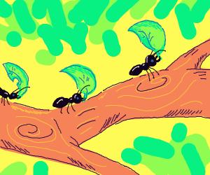 Ants stealing leaves