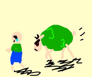 green sheep bores child