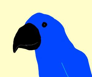 A blue parrot
