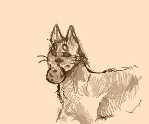 Cat w/ cookie
