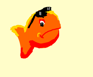 angry goldfish does not smile back