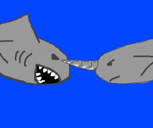 Narwhal vs shark