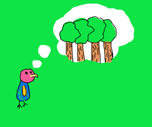 Bird thinking about nice forrest
