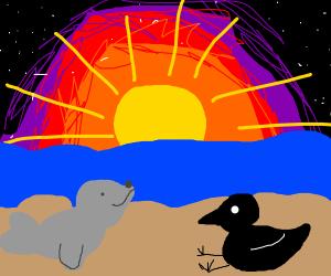 Seal and black bird @ beach w/ sunset