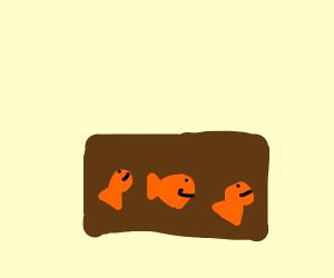 Goldfish in box