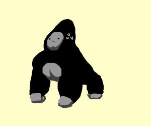 Sweaty Gorilla