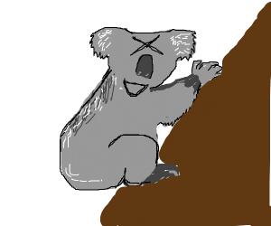 koala XD-ing