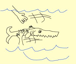 Pet Sawfish