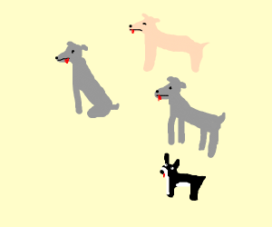 Cermet, Paesh, Marble, and Bunny