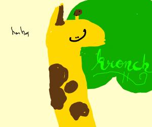 giraffe eats tree leaves